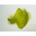 Peříčka zelená - balení 15 g (cca 250 kusů)