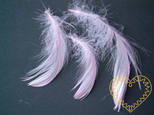 Peříčka růžová - balení 15 g (cca 250 kusů). Peříčka mají široké uplatnění jak při aranžování a výrobě dekorací, tak také např. při tvoření figurek ptáčků, andělíčků apod.
