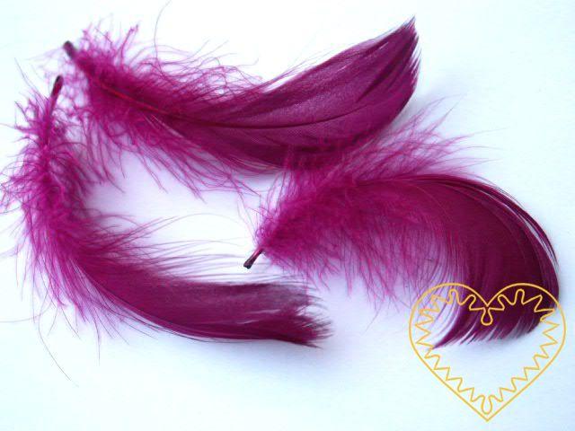 Peříčka bordó - balení 15 g (cca 250 kusů). Peříčka mají široké uplatnění jak při aranžování a výrobě dekorací, tak také např. při tvoření figurek ptáčků, andělíčků apod.